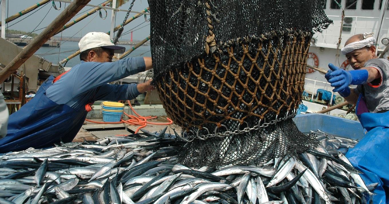 銚子の秋の代名詞ともいえる秋刀魚の水揚げ風景です。
