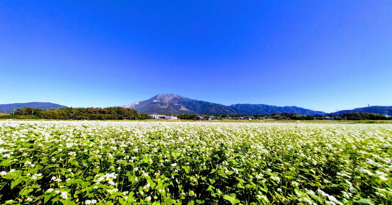 そば畑と伊吹山
