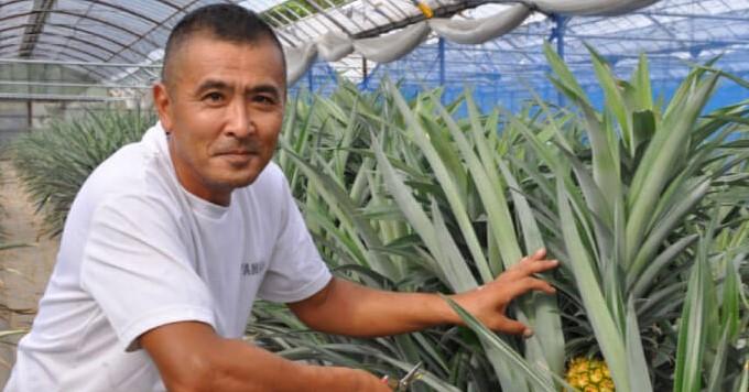 南大隅町でトロピカルフルーツを生産