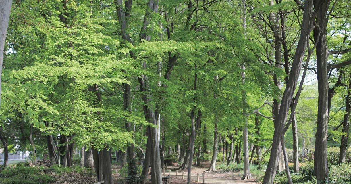 北本での暮らしのそばにある雑木林