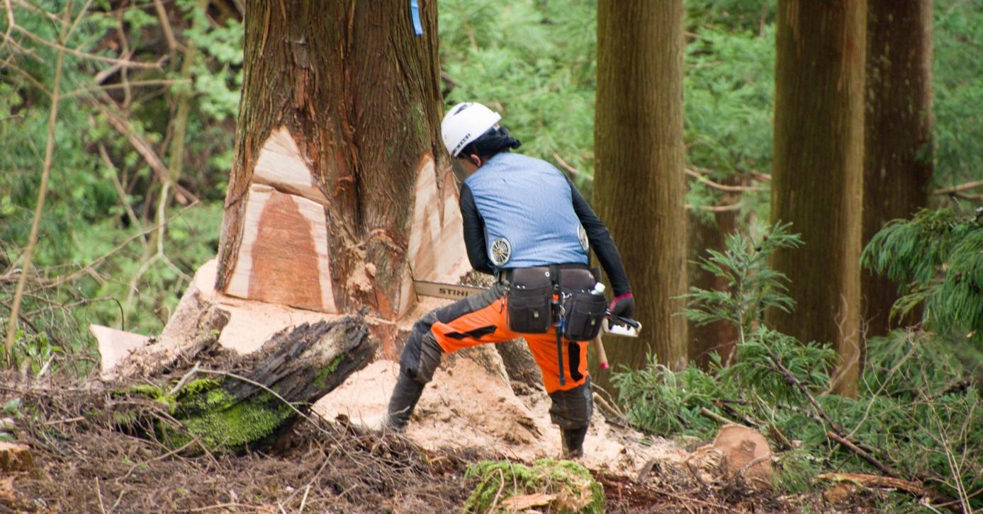 500年続く吉野林業